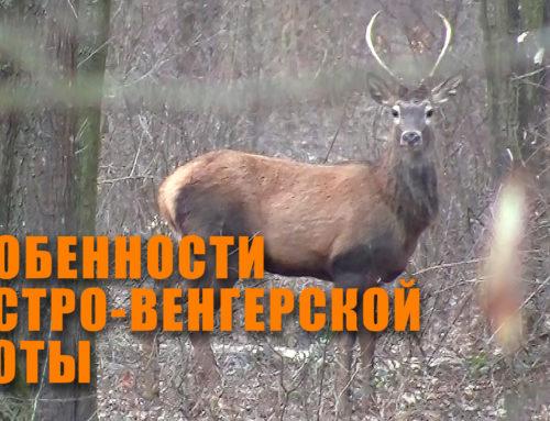 Новое видео по охоте из Австрии